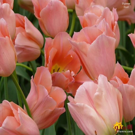 گل های فوق العاده زیبا و دیدنی