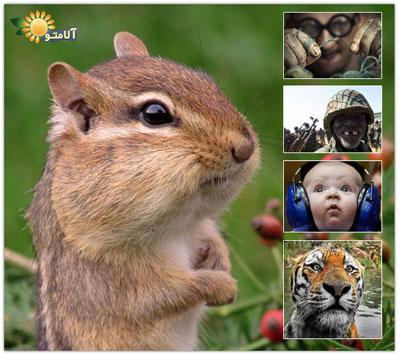عکسهای منتخب روز